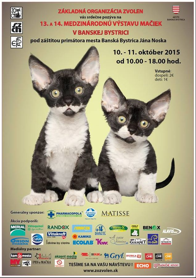 Medzinárodná výstava mačiek - Slovakia.travel d3cac2ea64e